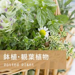 鉢植・観葉植物