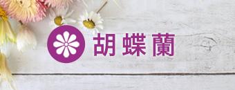 胡蝶蘭用 注文用紙