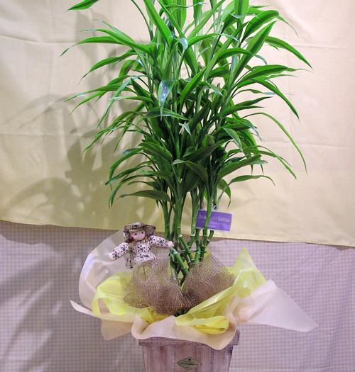 観葉植物-09