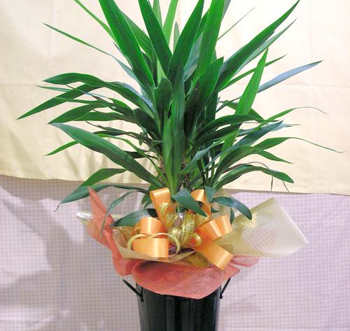 観葉植物-10
